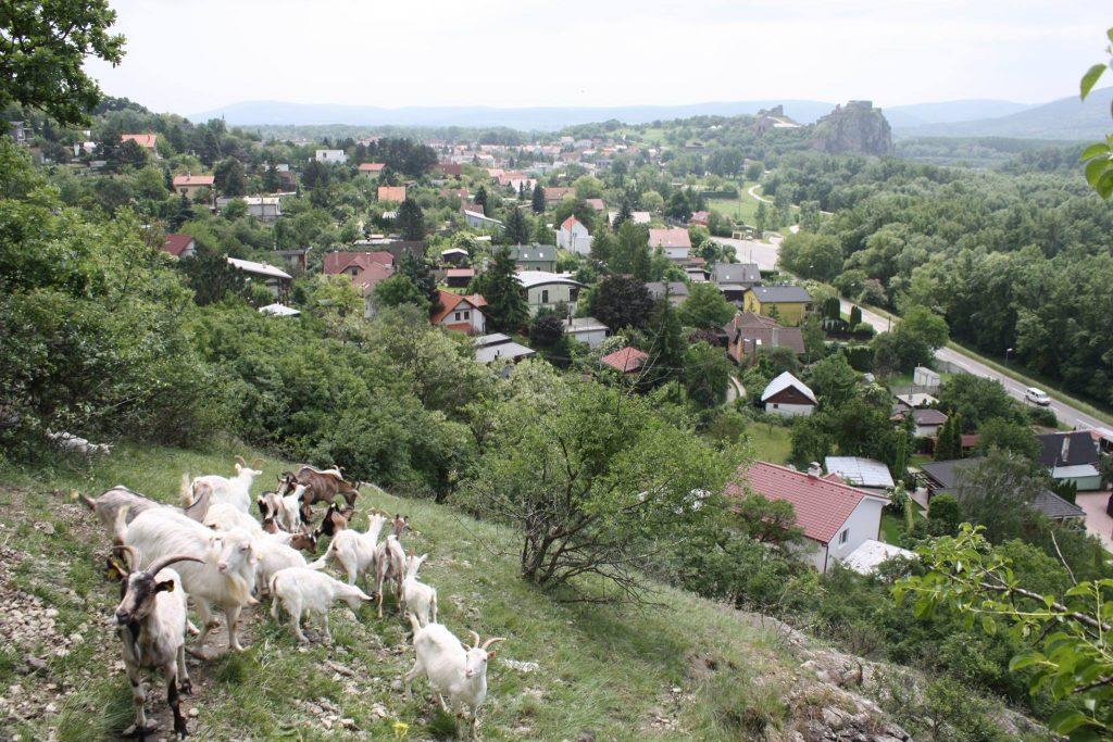 Pastva nad Devínom, foto BROZ